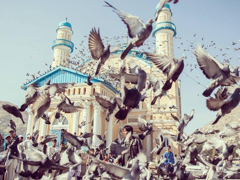 oiseaux.jpeg
