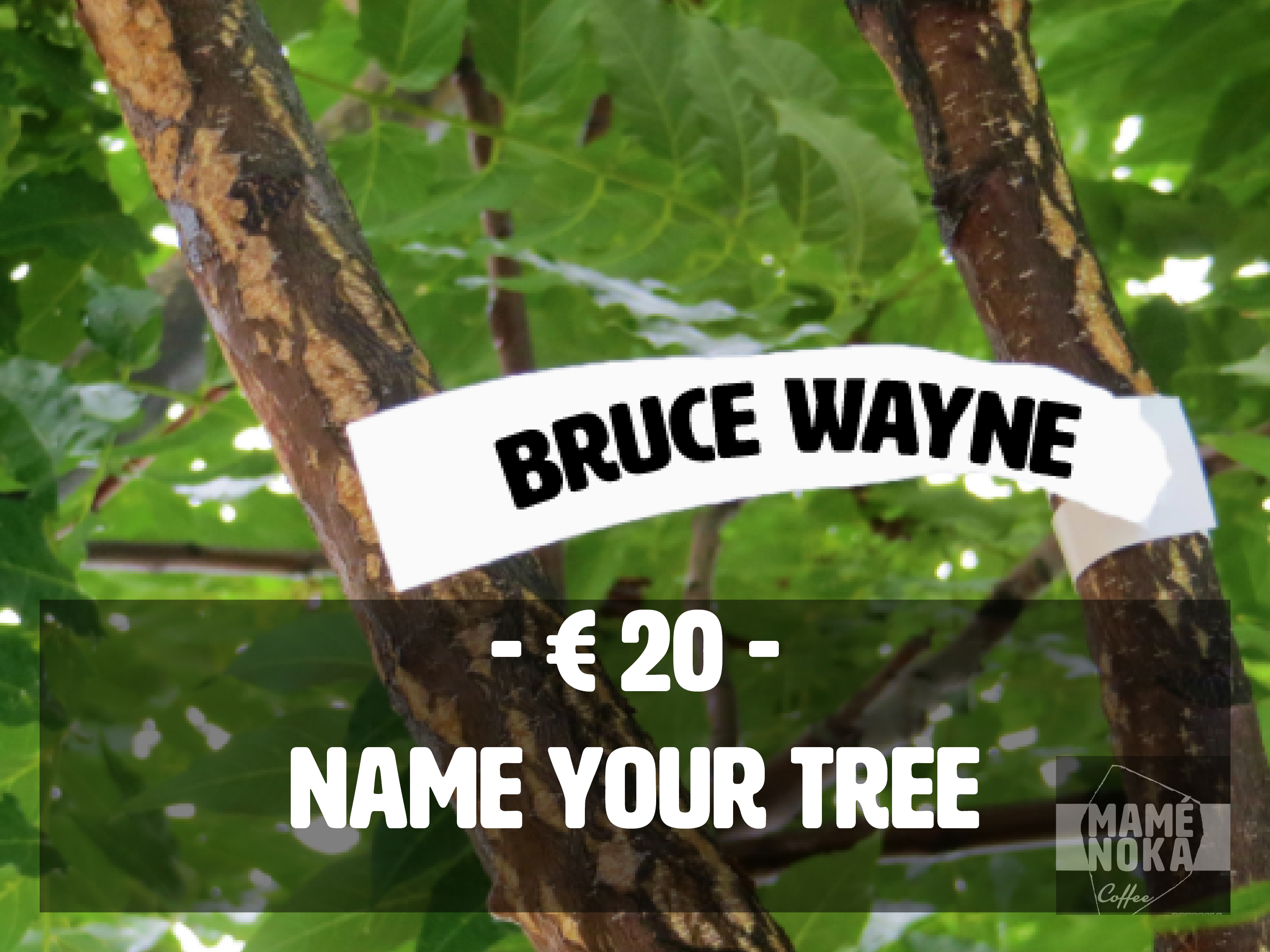 20_-_Name_your_tree-1484579651.jpg