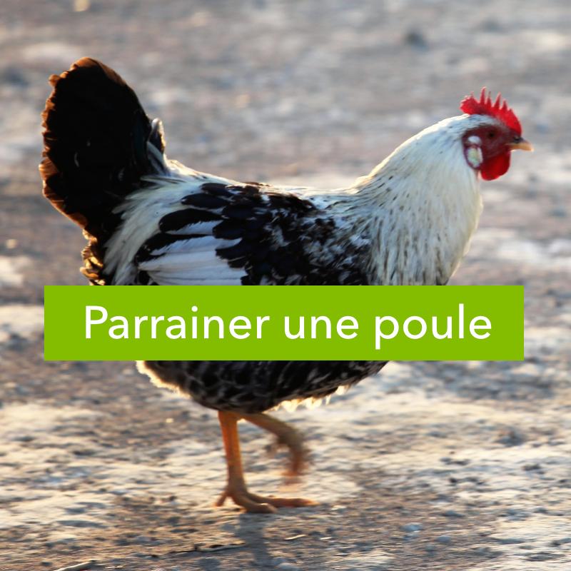 parrainer_poule-1487284655.jpg