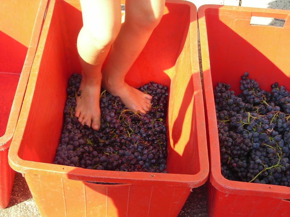 grape-harvest-373037_960_720-1488550040.jpg