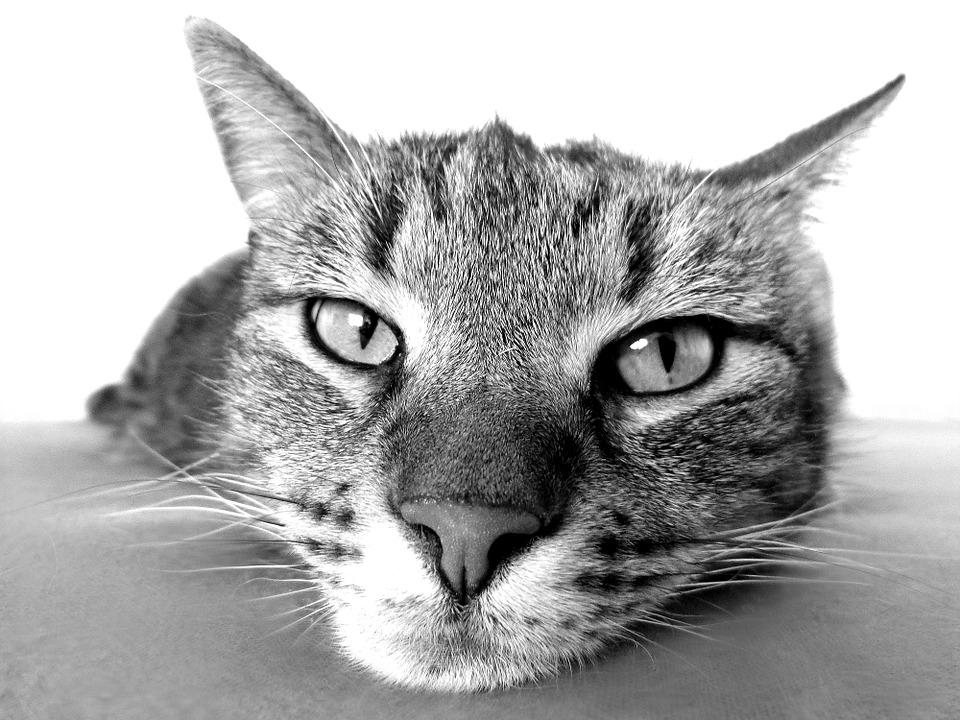 cat-98359_960_720-1489153687.jpg