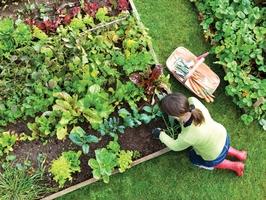 thumb_Vegetable-Garden-1467057293-1489327417.jpg