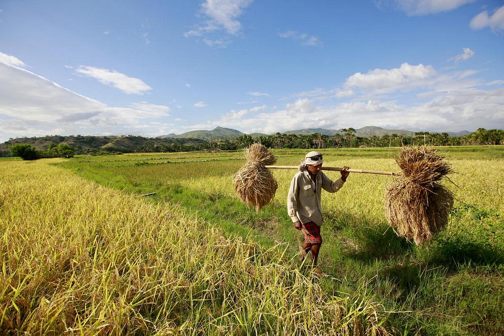Timor-Leste-Farmer-by-UN-Photos-1493368668.jpg