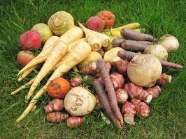 legumes-anciens-gamme-1493369037.jpg