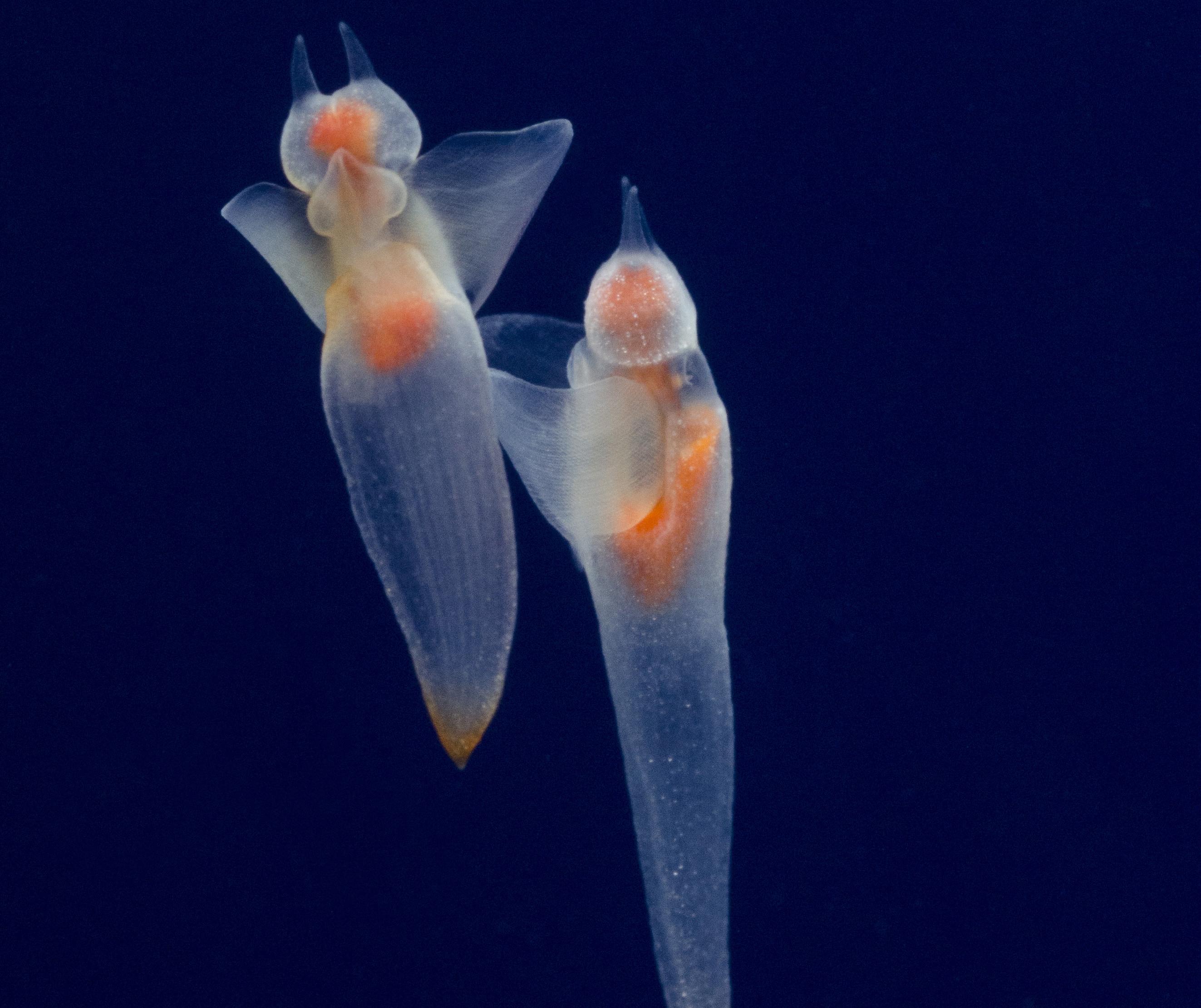 OCEANOPOLIS_internet-1505246903.jpg