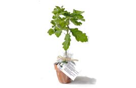 KissKissBankBank_Walden-Project-chene-arbre-1506283817.jpg