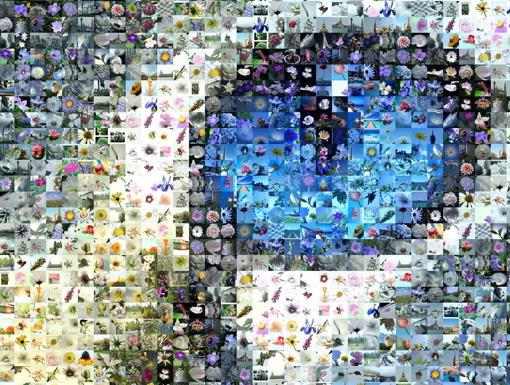 mosaic_software-1506320454.jpg