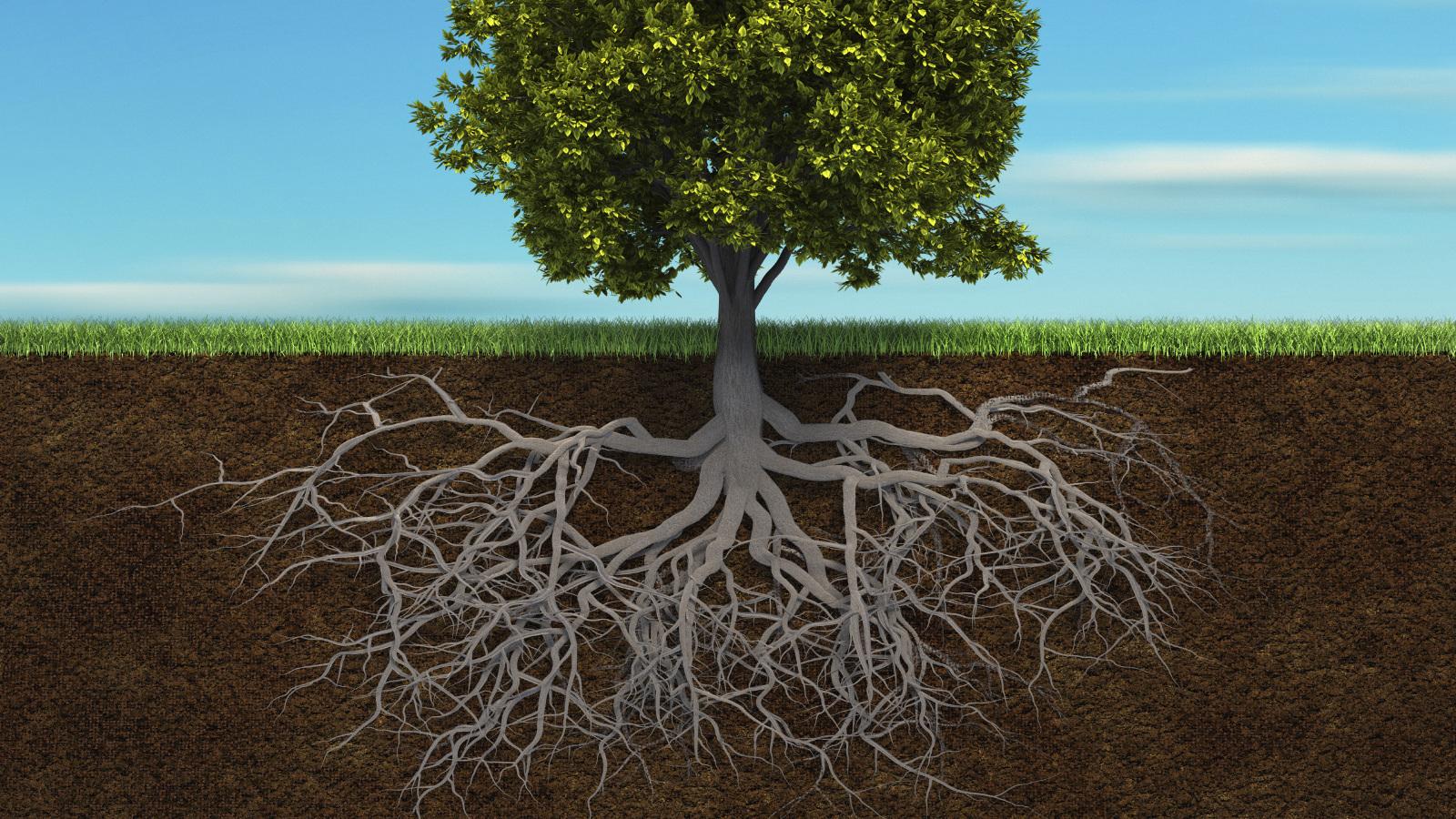 les-racines-1510935164.jpg