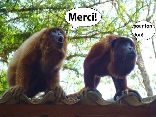 2singes_merci_pour_ton_don-1511873886.jpg