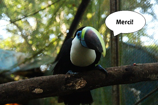 toucan_merci-1511873963.jpg