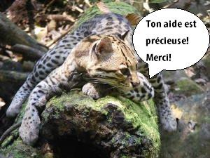 l_opard_ton_aide_est_pr_cieuse_merci-1511874399.jpg