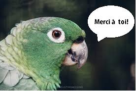 perroquet_merci___toi-1511875443.jpg