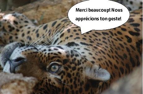 jagar_merci_bcp_appr_ton_geste-1512041249.jpg