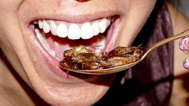 manger-insectes-1515082882.jpg