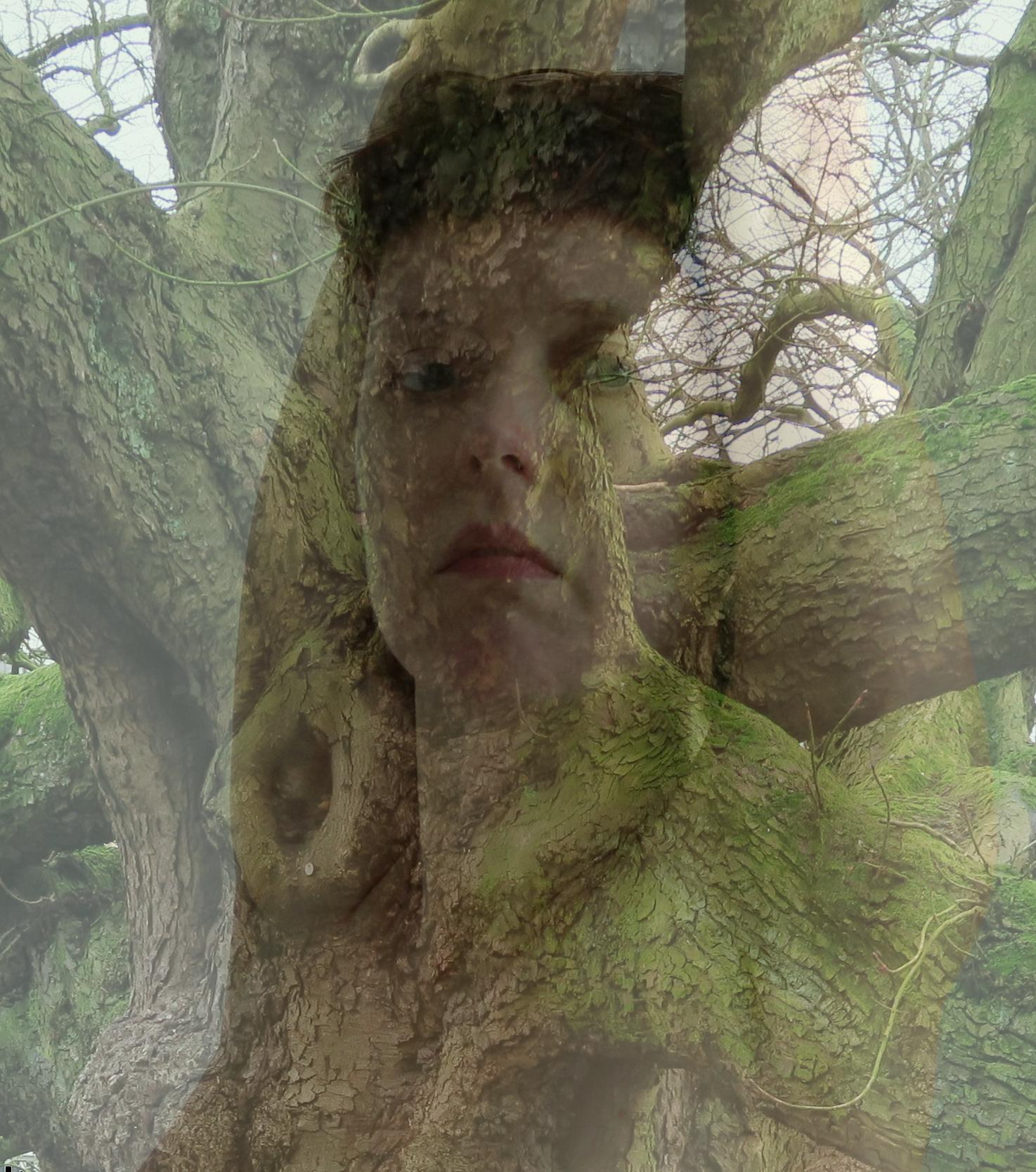 de_tail-celine-arbre-1516735532.png