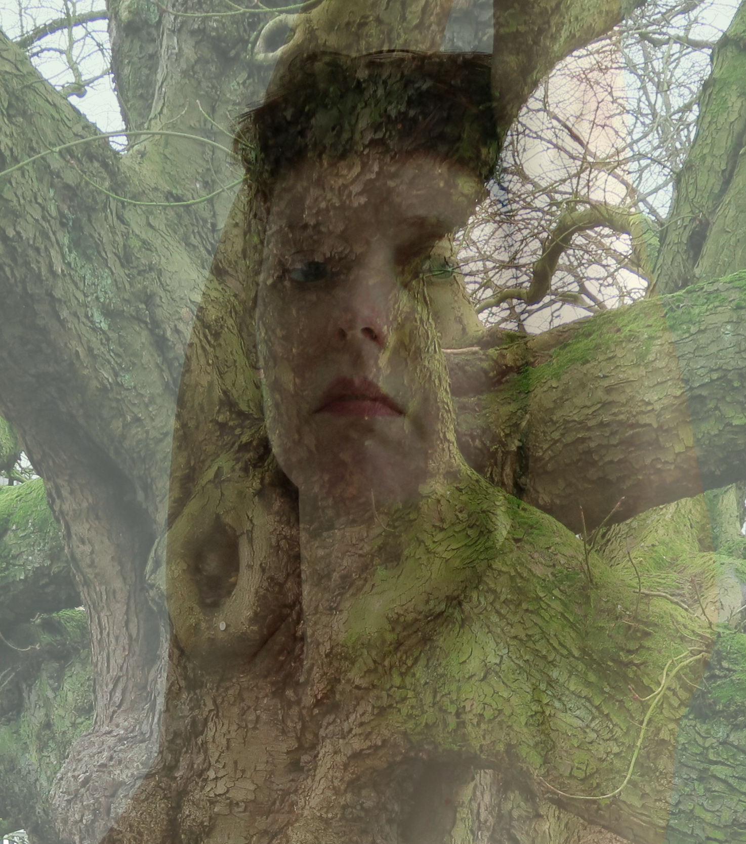 de_tail-celine-arbre-1516877709.png