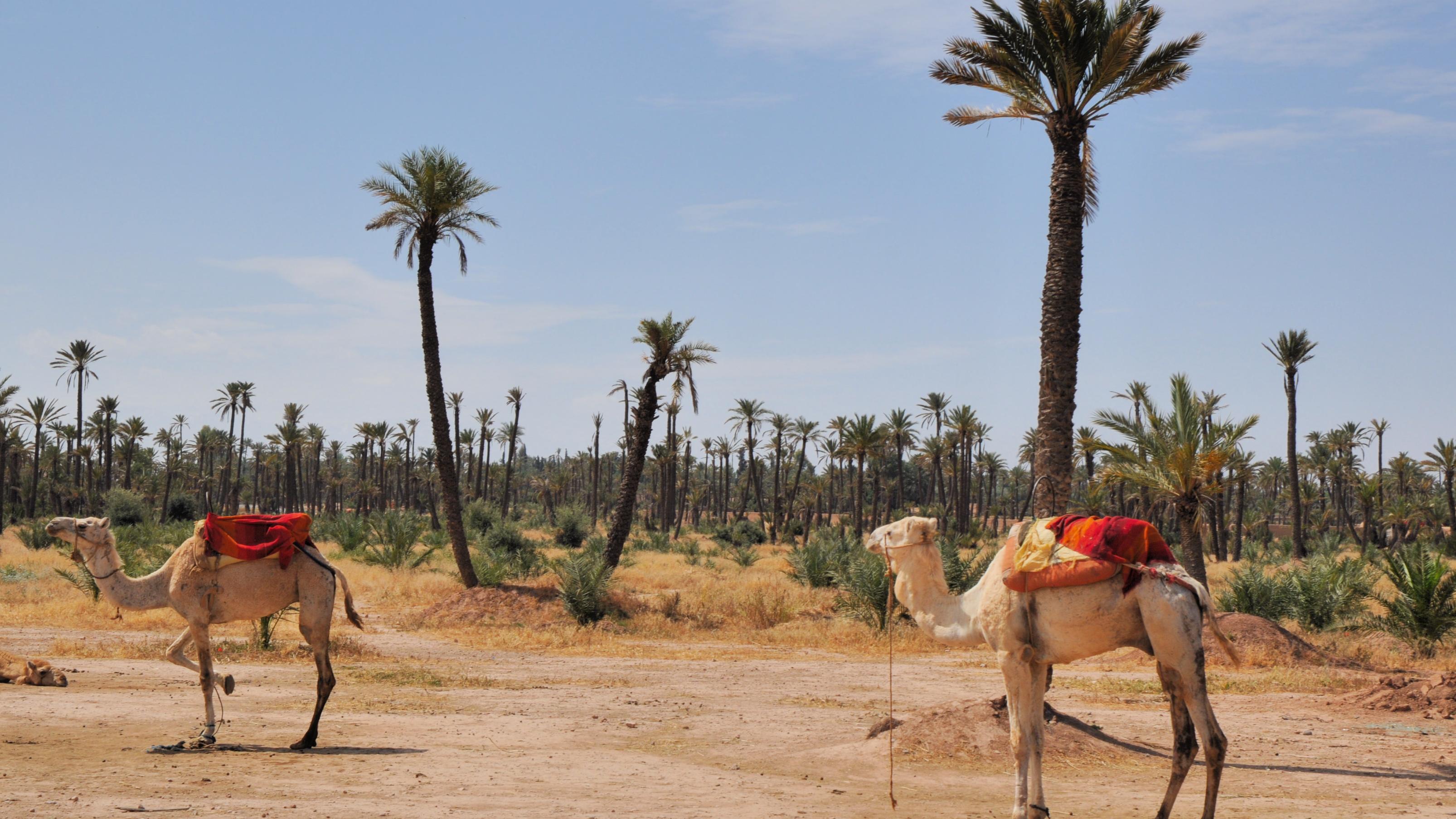 marrakeck-1516885271.jpg