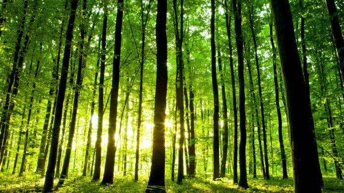 ernst-zurcher-chercheur-communication-arbres-1-e1501161102222-1517743419.jpg