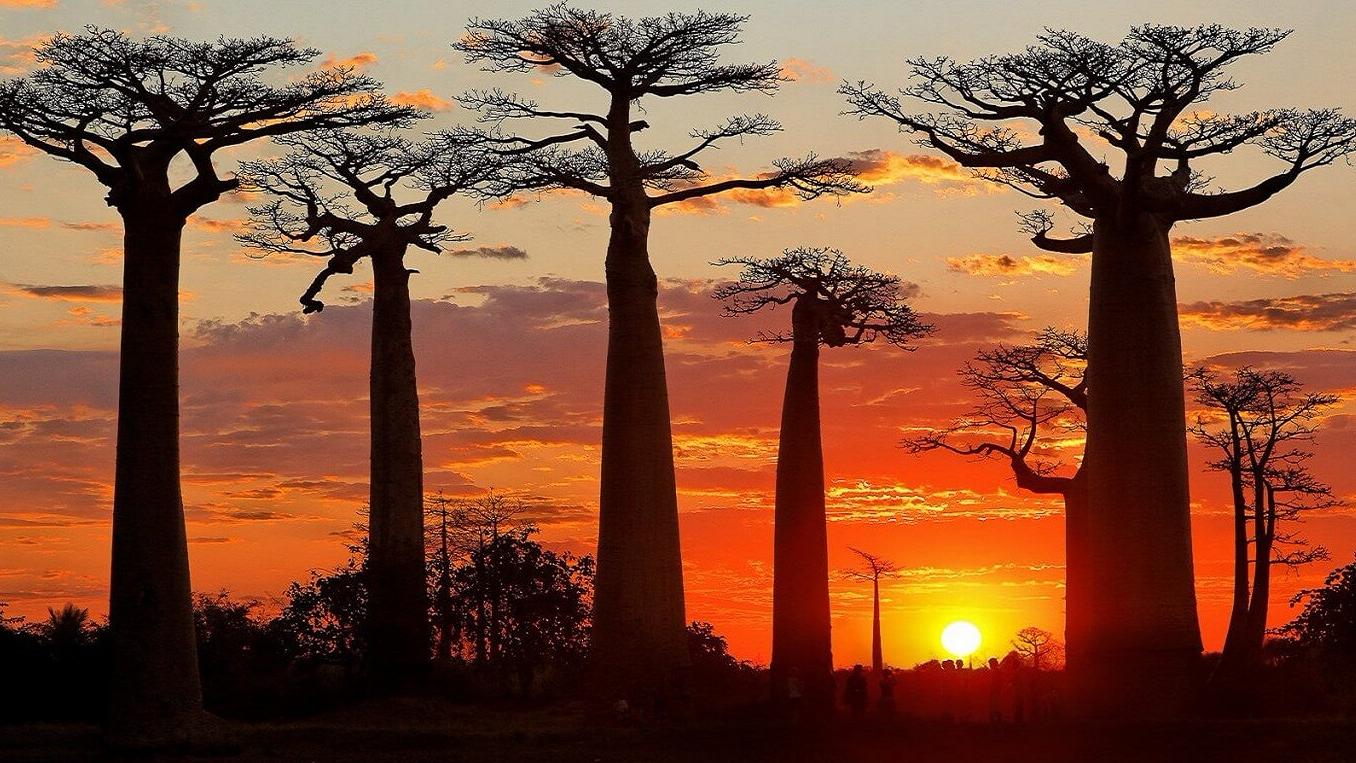 morondava-allee-des-baobabs-sun-set-1526-763-1517338018.jpg