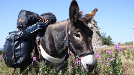 Belle ébène ânes
