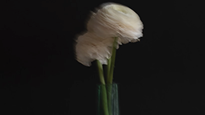 Se_rie_Fleurs-1523263122.jpg
