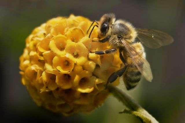 abeaddd8d4_50018558_ruche-abeille-qualite-air-pixage-photography-shutterstock-1526838145.jpg