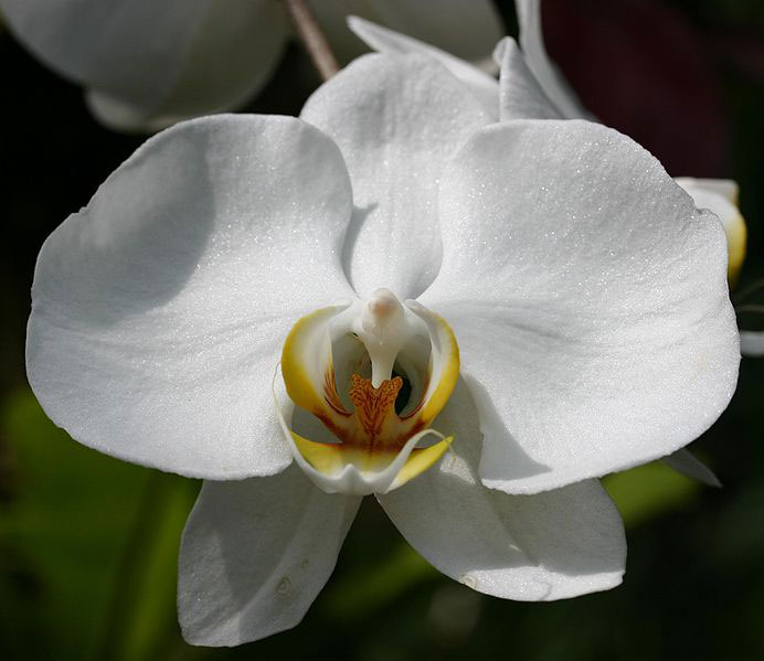 orchids-flower-3-1528198972.jpg