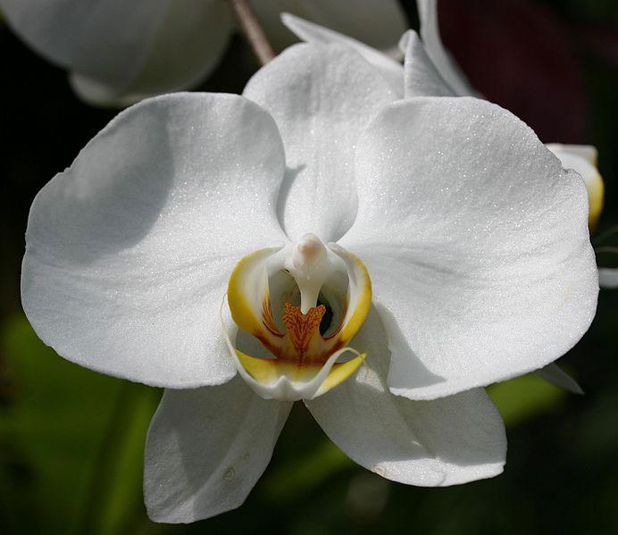 orchids-flower-3-1528216902.jpg