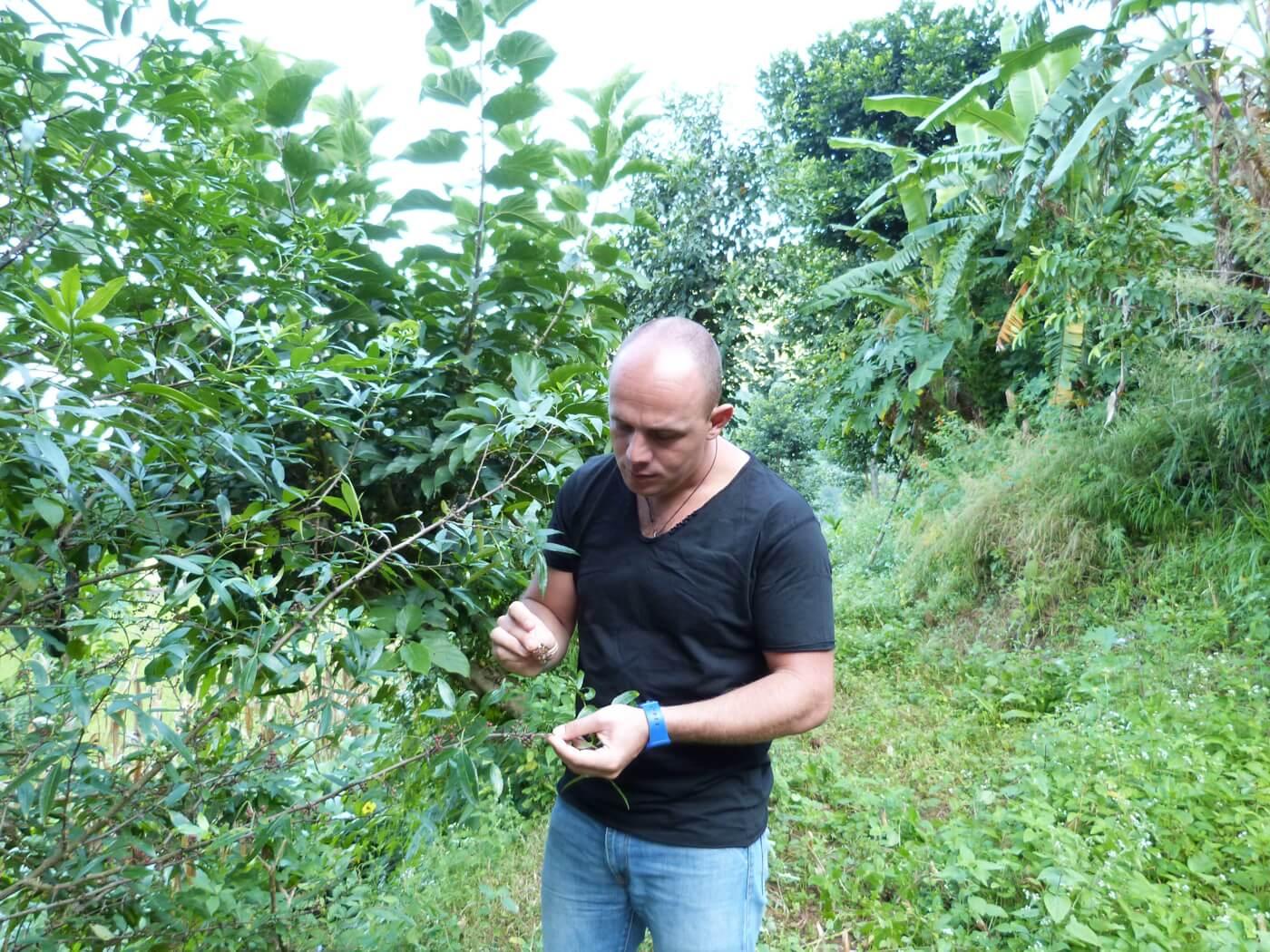 plantation-poivre-timut-nepal-1530011092.JPG
