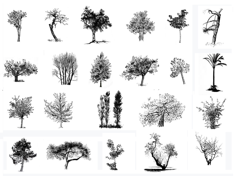 composite_arbres1.jpg