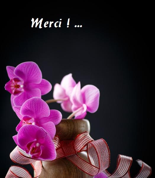 Merci_5-1410613219.jpg