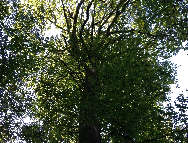 arbre_sur_pied_recadre-1411478937.jpg