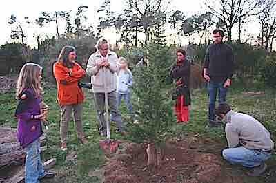 arbre-1431439895.jpg