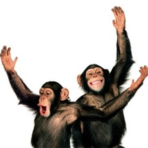 Normal_chimps