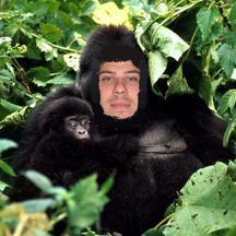 Normal gorillesdesmontagnes2