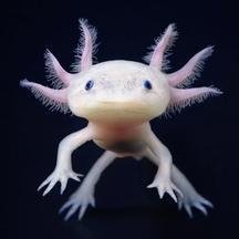 Normal 04 ht more than human axolotl jef ss 121115 ssv 1495052527