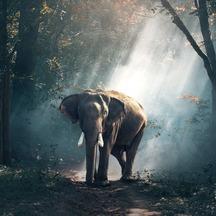 Normal_elephant-1822636_1920-1575661869