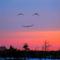 Thumb_capture_sourire-1511167446