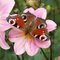 Thumb_papillon_enfance_st_apo-1409517300