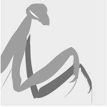 Normal_avatar-1423132853