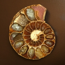 Normal_ammonite_cristallise__e-1472586914