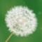 Thumb_logo-1433196903