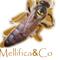 Thumb_mellificaco-1434561461