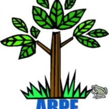 Normal_arbre-arpe-e1412972571146-1463428656