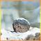 Thumb_avatar_kisskiss-1455104418